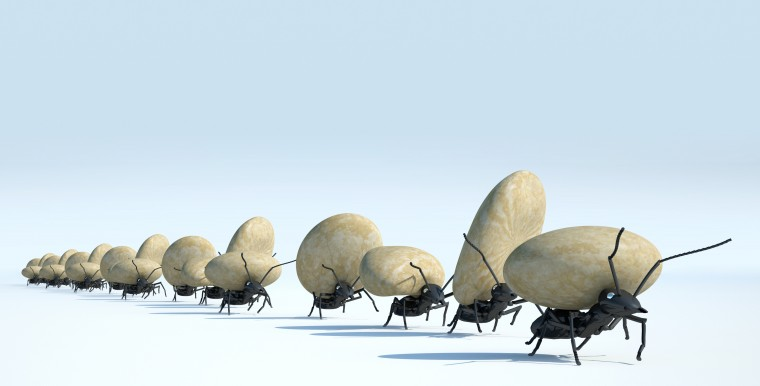 concept work, team of ants